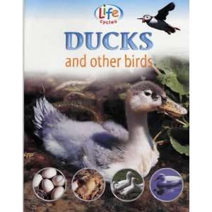 Life Cycles of Ducks and Other Birds (9781841383088