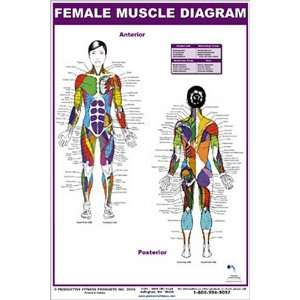 Female Muscle Diagram (9780973941104) Andre Noel Potvin