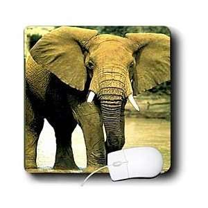 Wild animals   African Elephant   Mouse Pads Electronics