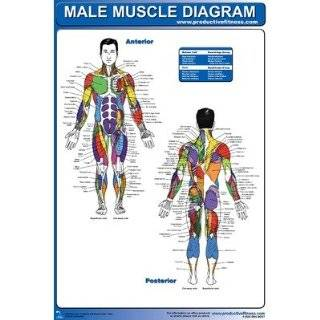 Female Muscle Diagram Poster: Sports & Outdoors