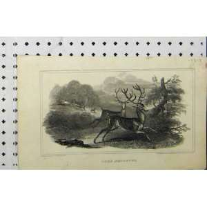 1817 Deer Shooting Stag Man Gun Country Engraving Home