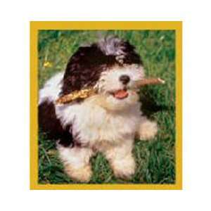 Magnetic Bookmark Shih Tzu Puppy (Ready To Play), Beautiful and