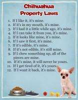 CHIHUAHUA Dog Magnet Property Laws PERSONALIZED With YOUR Dogs Name