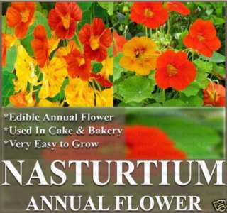 BULK NASTURTIUM Flower Seeds ~ Edible Decor Tropaeolum