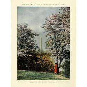1926 Print Washington D.C. Monument Cherry Blossom Trees