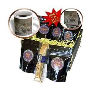 Big Cat Safari   Lion king on a rode   Coffee Gift Baskets   Coffee
