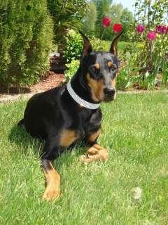 Pink Swarovski Crystal Rhinestone Dog Collar fits 16 20 necks